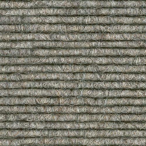 Silver Birch 538